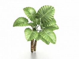 Elephant ear tree 3d model