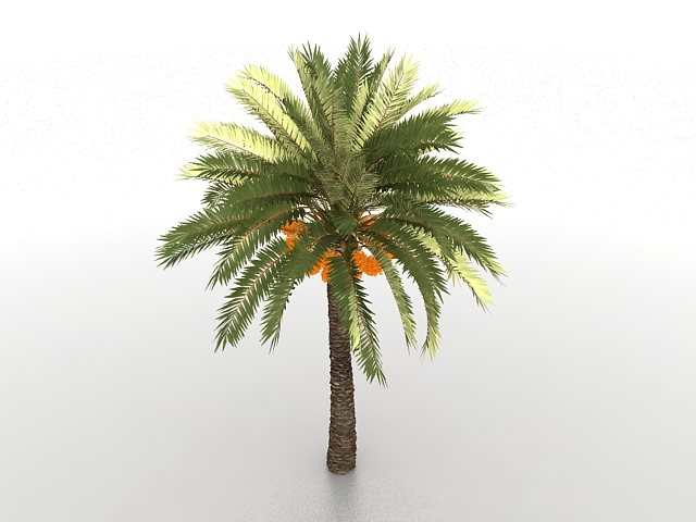 Palm Tree With Coconuts 3d Model 3ds Max Files Free