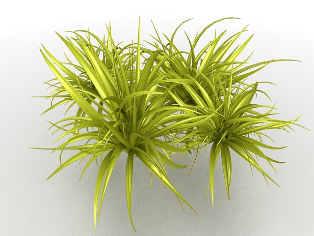 Ornamental Grass Plant 3d Model 3ds Max Files Free