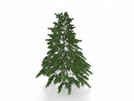 Deodar pine tree 3d model
