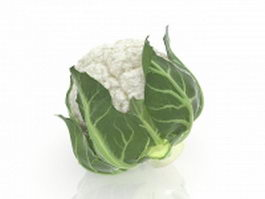 White cauliflower 3d model