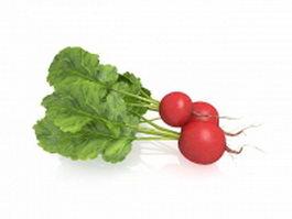 European red radish vegetable 3d model