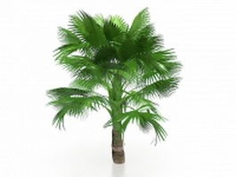 California fan palm tree 3d model