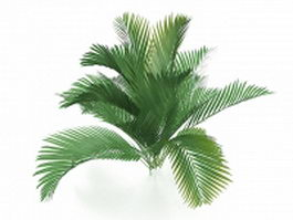 Queen palm tree 3d model
