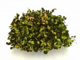 Topiary shrubs for garden 3d model