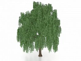 Beautiful weeping willow tree 3d model