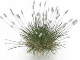 Phragmites grass 3d preview