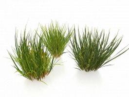 Winter grasses 3d model