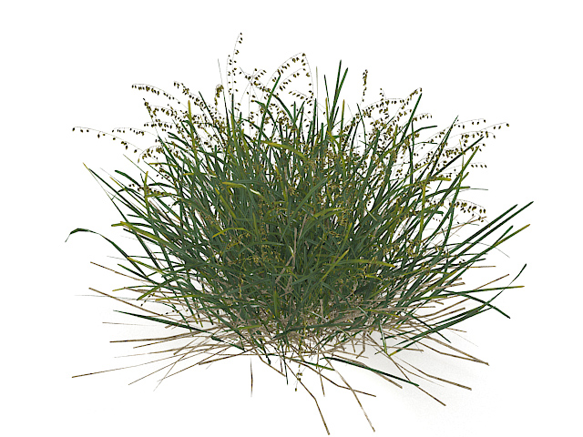 panic grass 3d model 3ds max files free download