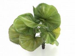 Dwarf areca palm tree 3d model