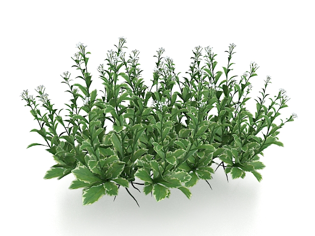 Small Flower Plants 3d Model 3ds Max Files Free Download