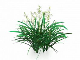 Cymbidium plants 3d model