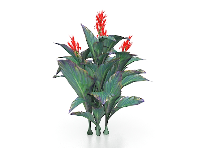 Red Canna Lily Plants 3d Model 3ds Max Files Free Download