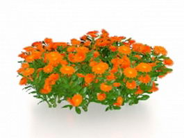 Mexican sunflower plants 3d model