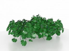 Garden parsley plant 3d model