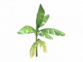 Musa banana tree 3d preview