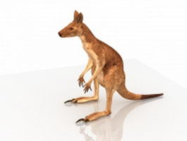 Australia red kangaroo 3d model