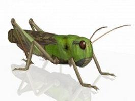 Migratory locust 3d model