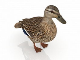 Pacific black duck 3d model