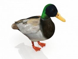 Green head duck 3d model