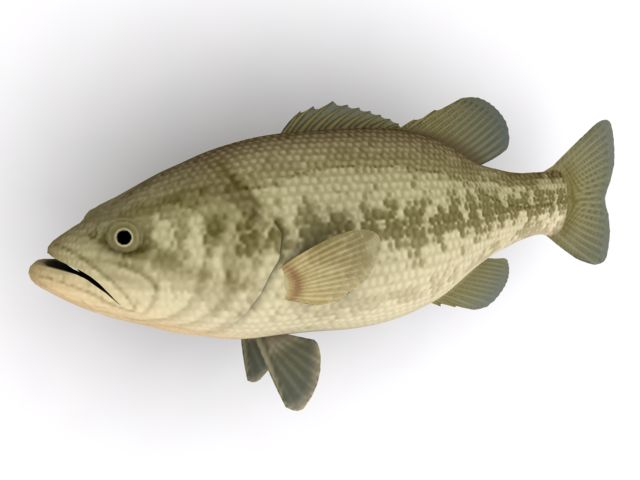Black bass fish 3d model 3ds max files free download for Bass fishing 3d