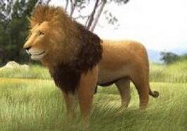 Grassland lion 3d model