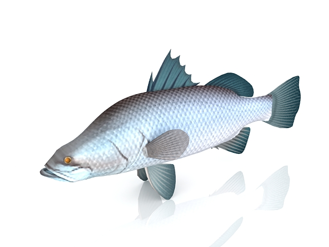 Asian sea bass fish 3d model 3ds max files free download for Bass fishing 3d