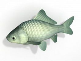 Prussian carp fish 3d model