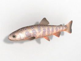 Dolly Varden trout 3d model