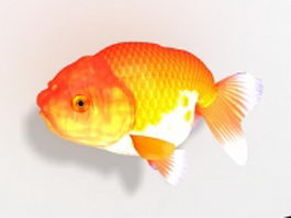 Japanese Ranchu goldfish 3d model