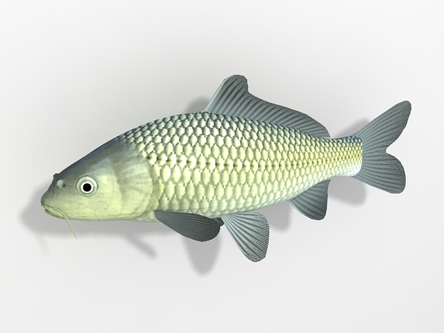 how to make a 3d fish model
