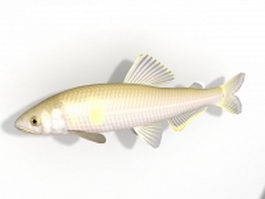 Ayu sweetfish 3d model