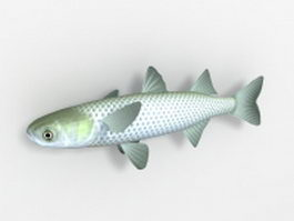 Scissortail Rasbora fish 3d model
