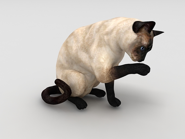 siamese cat 3d model -#main