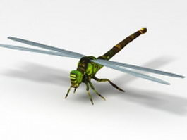 Green dragonfly 3d model