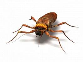 American cockroach 3d model