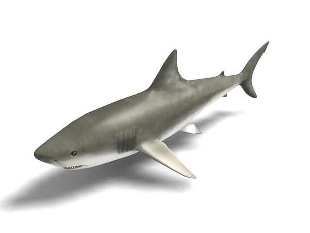 Whale shark 3d rendering