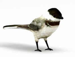 Chickadee bird 3d model