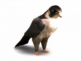Peregrine Falcon 3d model