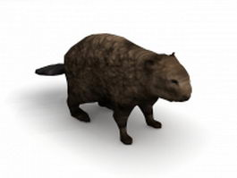 American beaver animal 3d model