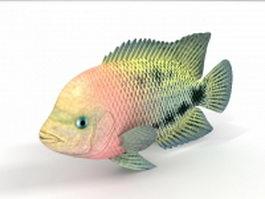 Redbreast sunfish 3d model