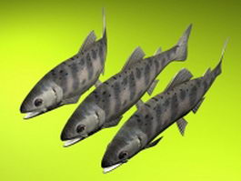 Black trout fish 3d model