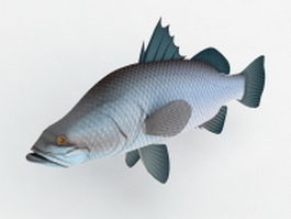Australian Barramundi Fish 3d model
