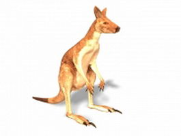 Red kangaroo 3d model