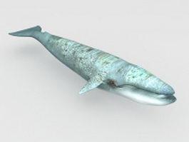 Blue whale 3d model