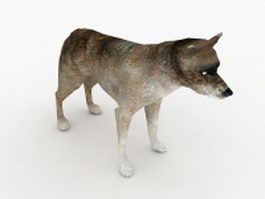 Northern coyote 3d model