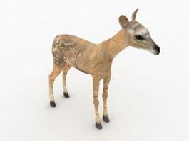 Fawn deer 3d model