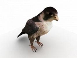 Lanner falcon 3d model