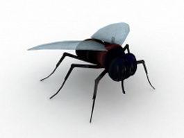 Black fly 3d model