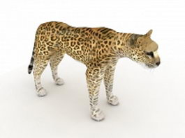 Arabian leopard 3d model